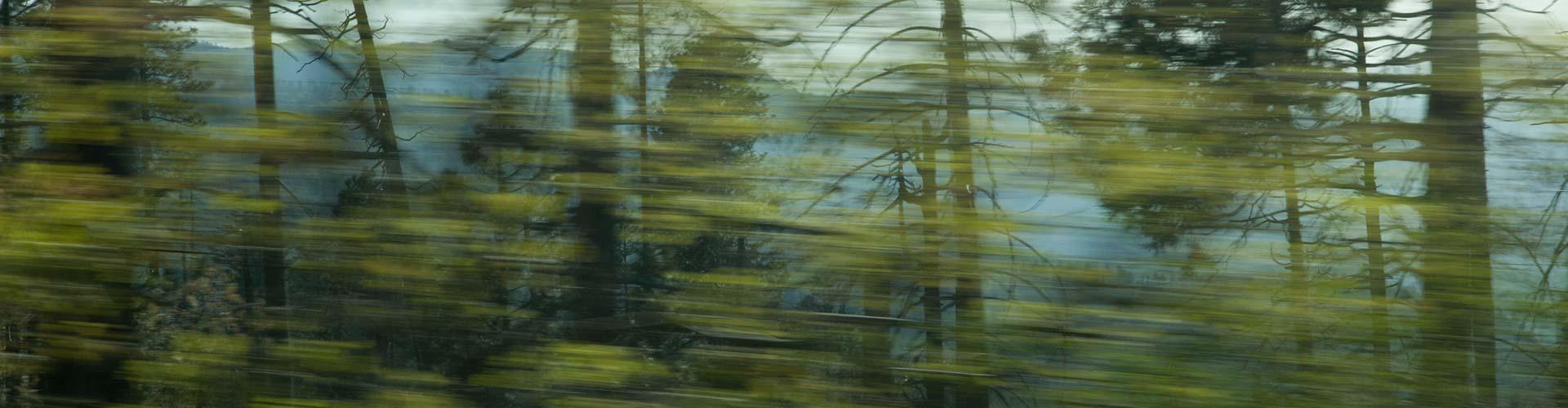 banner-bomen