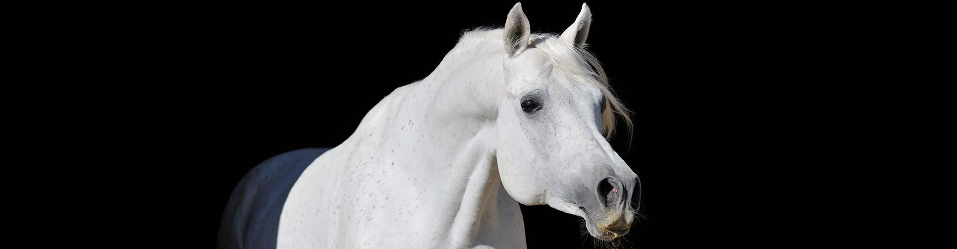 banner-paard-2