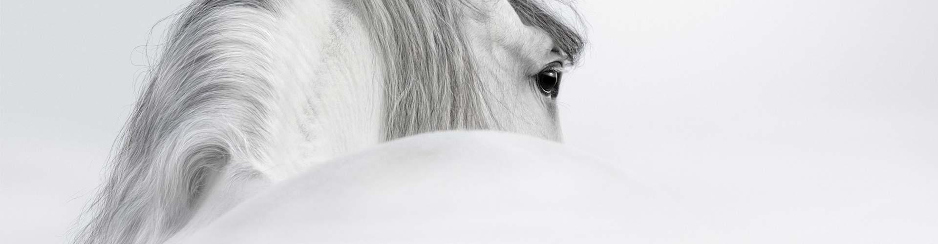 banner-paard